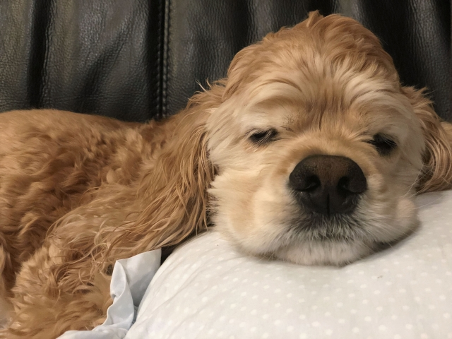 おしっこ 舐める 犬