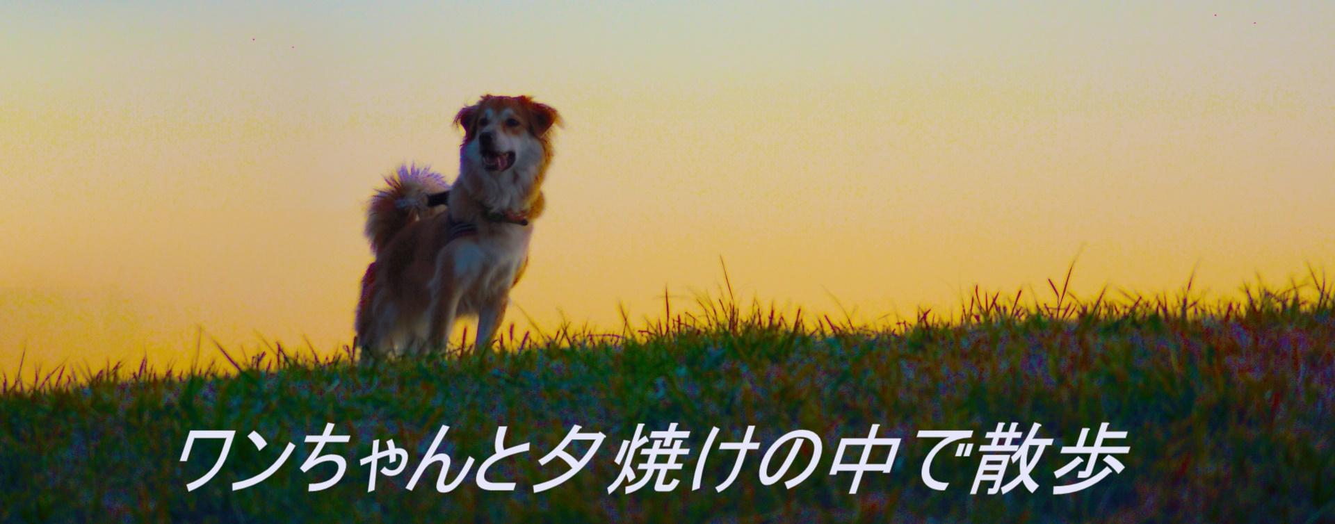 ワンちゃんと夕焼けの中で散歩
