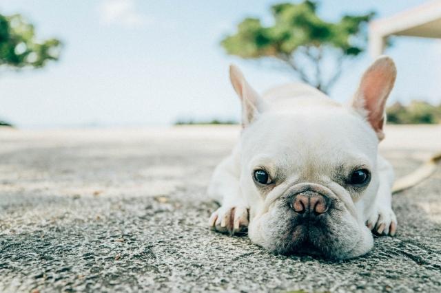 犬 腎臓 フード