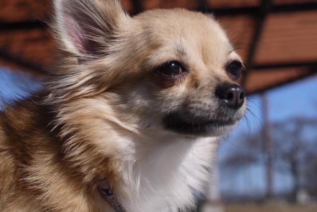 腎臓 病 りんご 犬 【症状別 食材ナビ】犬の心臓病予防・食事療法特集